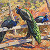 Peacocks Three